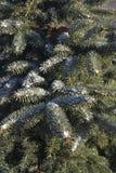 εύκολος επιμεληθείτε την εικόνα στο διανυσματικό χειμώνα δέντρων Στοκ φωτογραφία με δικαίωμα ελεύθερης χρήσης