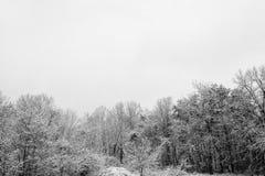 εύκολος επιμεληθείτε την εικόνα στο διανυσματικό χειμώνα δέντρων Στοκ Εικόνες