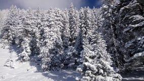 εύκολος επιμεληθείτε την εικόνα στο διανυσματικό χειμώνα δέντρων Στοκ Εικόνα