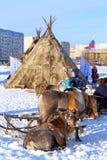 Ελάφια και πανούκλες Nenets ενάντια στην πόλη Στοκ Φωτογραφίες