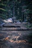 Ελάφια στο δάσος στοκ εικόνες
