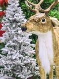 Ελάφια Χριστουγέννων κοντά στο χριστουγεννιάτικο δέντρο Στοκ Φωτογραφία