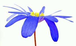 Ελάχιστα μπλε Στοκ φωτογραφία με δικαίωμα ελεύθερης χρήσης