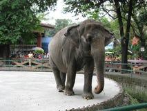 Ελέφαντας, ζωολογικός κήπος της Μανίλα, Μανίλα, Φιλιππίνες στοκ φωτογραφία με δικαίωμα ελεύθερης χρήσης