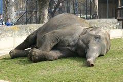 Ελέφαντας ζωολογικών κήπων Στοκ φωτογραφία με δικαίωμα ελεύθερης χρήσης