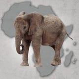 Ελέφαντας και Αφρική στοκ εικόνα