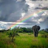 Ελέφαντας και ουράνιο τόξο στοκ εικόνα