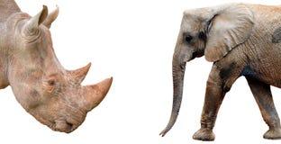 Ελέφαντας και ρινόκερος που απομονώνονται στο άσπρο υπόβαθρο Στοκ φωτογραφία με δικαίωμα ελεύθερης χρήσης
