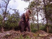 Ελέφαντας Κινηματογράφηση σε πρώτο πλάνο Στοκ φωτογραφία με δικαίωμα ελεύθερης χρήσης
