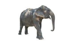 Ελέφαντας κούρασης Στοκ φωτογραφία με δικαίωμα ελεύθερης χρήσης