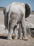 Ελέφαντας κλίσης Στοκ Εικόνα