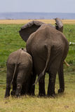 Ελέφαντας με το μωρό στοκ εικόνες με δικαίωμα ελεύθερης χρήσης