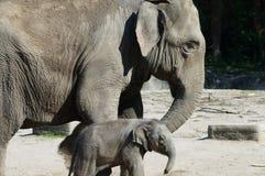 Ελέφαντας μητέρων με το μωρό του Στοκ Φωτογραφία