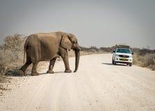 Ελέφαντας μωρών που διασχίζει το δρόμο Στοκ φωτογραφία με δικαίωμα ελεύθερης χρήσης