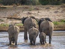 Ελέφαντας που διασχίζει τον ποταμό Στοκ φωτογραφία με δικαίωμα ελεύθερης χρήσης