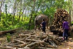 Ελέφαντας που τραβά έναν κορμό δέντρων Στοκ Εικόνα