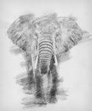 Ελέφαντας Σκίτσο με το μολύβι απεικόνιση αποθεμάτων