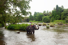Ελέφαντας, Σρι Λάνκα Στοκ φωτογραφίες με δικαίωμα ελεύθερης χρήσης