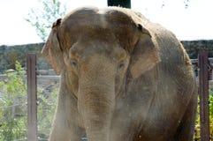 Ελέφαντας στενό σε επάνω πάρκων Στοκ Φωτογραφία