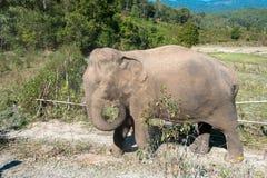 Ελέφαντας στη ζούγκλα Στοκ φωτογραφία με δικαίωμα ελεύθερης χρήσης