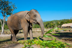 Ελέφαντας στη ζούγκλα Στοκ Φωτογραφίες