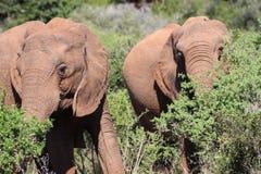 Ελέφαντας στον ήλιο Στοκ φωτογραφία με δικαίωμα ελεύθερης χρήσης