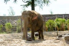 Ελέφαντας στον ευρύ πυροβολισμό πάρκων Στοκ φωτογραφία με δικαίωμα ελεύθερης χρήσης