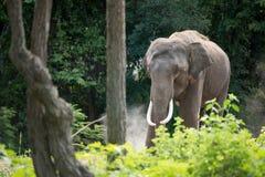 Ελέφαντας στο δάσος Στοκ φωτογραφία με δικαίωμα ελεύθερης χρήσης