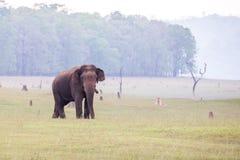 Ελέφαντας στο βιότοπο Στοκ Φωτογραφίες