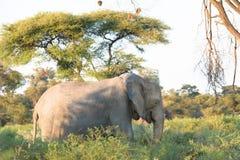 Ελέφαντας στο όμορφο τοπίο Στοκ εικόνα με δικαίωμα ελεύθερης χρήσης