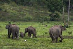 ελέφαντας Ταϊλάνδη της Ασί&a Στοκ Φωτογραφίες