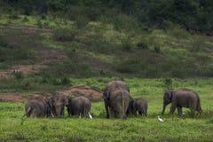 ελέφαντας Ταϊλάνδη της Ασί&a Στοκ φωτογραφία με δικαίωμα ελεύθερης χρήσης