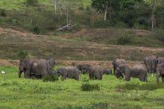 ελέφαντας Ταϊλάνδη της Ασί&a Στοκ εικόνες με δικαίωμα ελεύθερης χρήσης