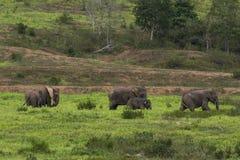 ελέφαντας Ταϊλάνδη Στοκ φωτογραφία με δικαίωμα ελεύθερης χρήσης