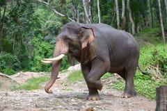 ελέφαντας Ταϊλανδός Στοκ εικόνες με δικαίωμα ελεύθερης χρήσης