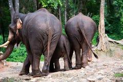 ελέφαντας Ταϊλανδός Στοκ Εικόνα