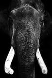 ελέφαντας Ταϊλανδός Στοκ φωτογραφία με δικαίωμα ελεύθερης χρήσης