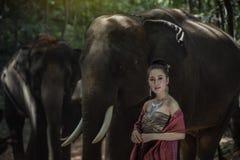 Ελέφαντας της Ταϊλάνδης Στοκ Εικόνες