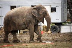 Ελέφαντας τσίρκων στα παρασκήνια Στοκ φωτογραφία με δικαίωμα ελεύθερης χρήσης