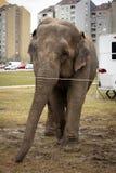 Ελέφαντας τσίρκων στα παρασκήνια Στοκ εικόνες με δικαίωμα ελεύθερης χρήσης