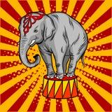 Ελέφαντας τσίρκων στο λαϊκό διάνυσμα ύφους τέχνης βάθρων ελεύθερη απεικόνιση δικαιώματος