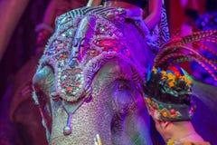 Ελέφαντας τσίρκων στο Μαύρο Στοκ εικόνες με δικαίωμα ελεύθερης χρήσης