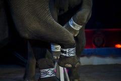 Ελέφαντας τσίρκων Στοκ εικόνες με δικαίωμα ελεύθερης χρήσης