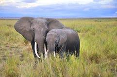 Ελέφαντας Στοκ φωτογραφία με δικαίωμα ελεύθερης χρήσης