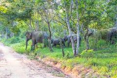 Ελέφαντες ένα πέρασμα ο δρόμος Στοκ φωτογραφία με δικαίωμα ελεύθερης χρήσης