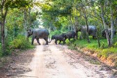Ελέφαντες ένα πέρασμα ο δρόμος Στοκ εικόνες με δικαίωμα ελεύθερης χρήσης