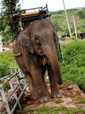 Ελέφαντες εργασίας Στοκ φωτογραφία με δικαίωμα ελεύθερης χρήσης