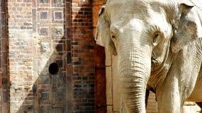 ελέφαντες Ινδός Στοκ φωτογραφία με δικαίωμα ελεύθερης χρήσης