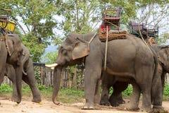 Ελέφαντες που οδηγούν από τους τουρίστες Στοκ φωτογραφία με δικαίωμα ελεύθερης χρήσης