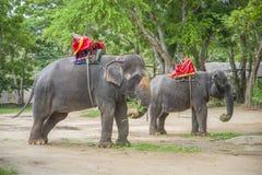 Ελέφαντες που περιμένουν τους τουρίστες Στοκ Εικόνες